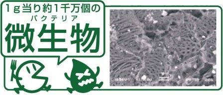 微生物による分解